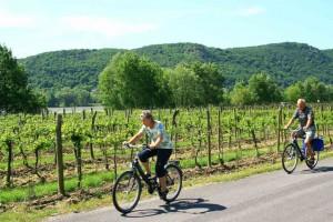 Radfahren in der Wachau © Stadtgemeinde Mautern